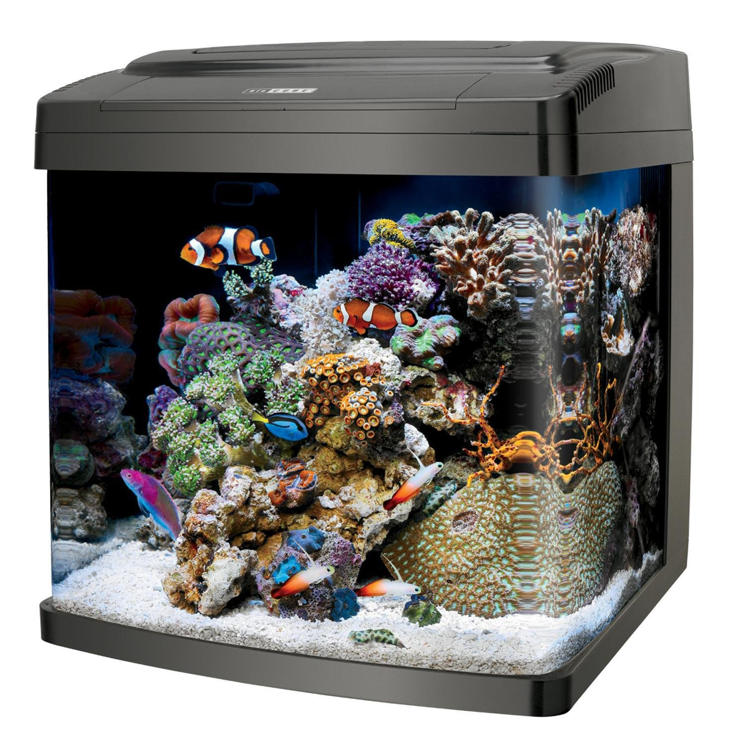 Cool fish tanks aquariums for Freshwater fish tank setup