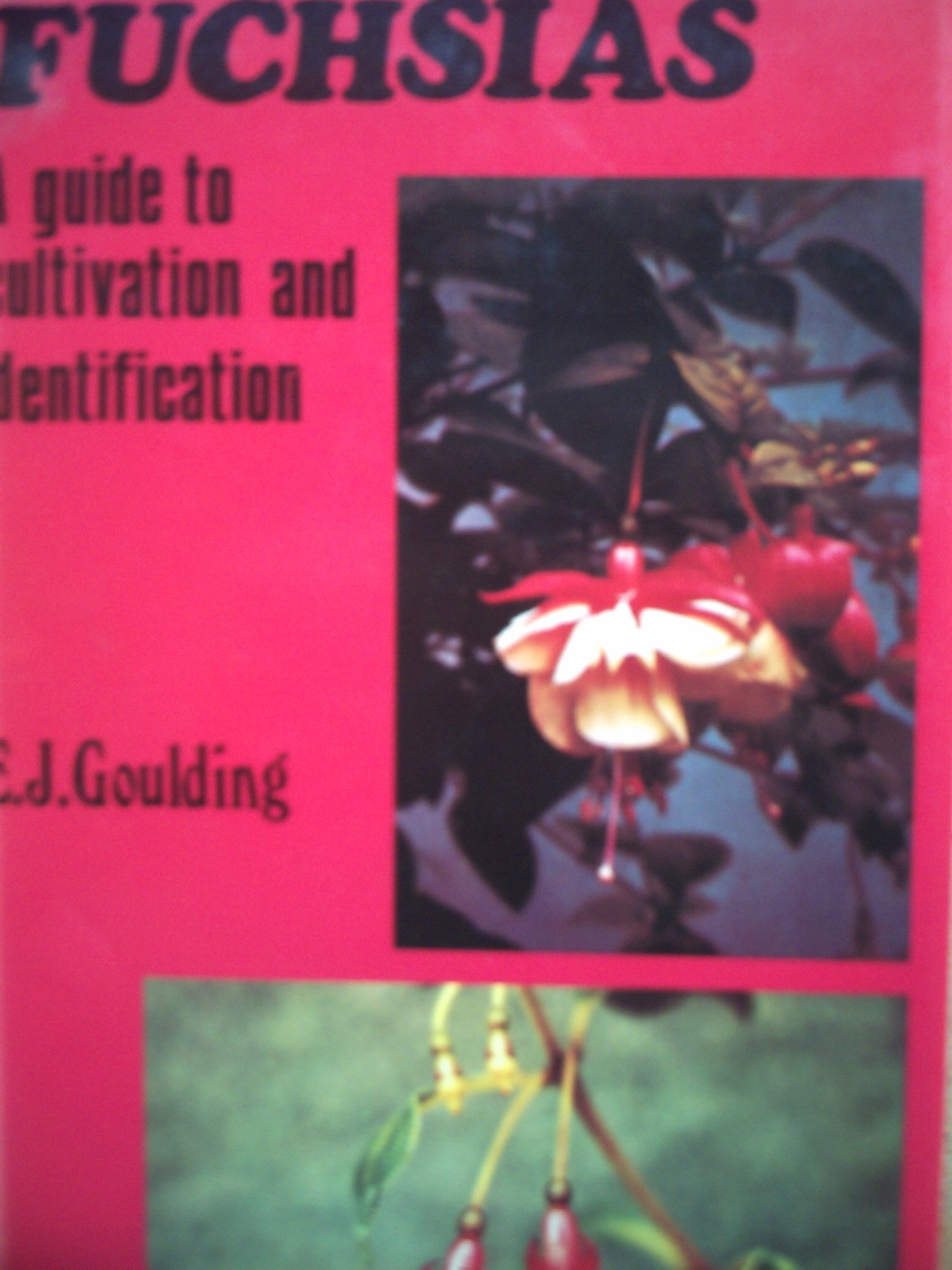 Fuchsias: A Guide to Cultivation and Identification