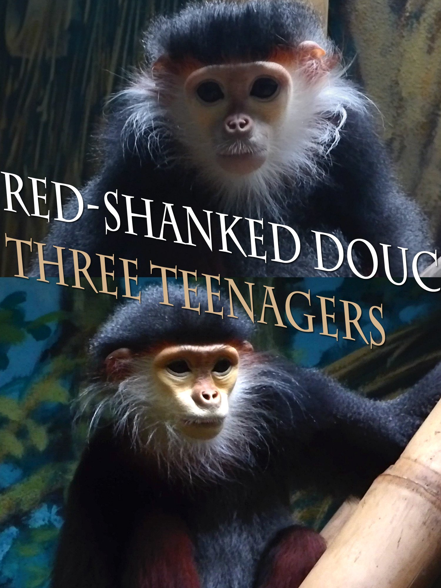 Red-shanked douc. Three teenagers on Amazon Prime Instant Video UK