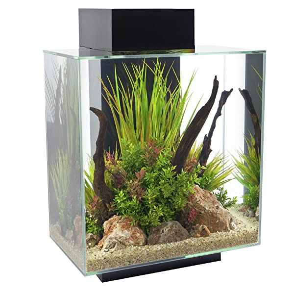 Fluval Edge Aquarium with LED Light Review