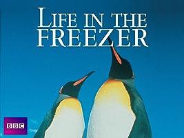 Life in the Freezer - Season 1