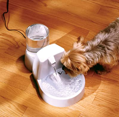best dog water fountain for the money