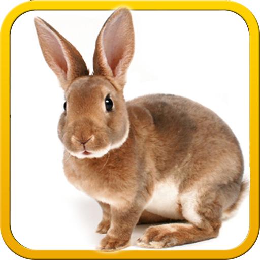 real-pet-bunny-rabbit-3d-simulator