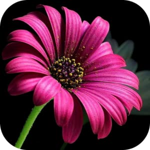 & Live Wallpapers by Gardening Parks!: Appstore for Android