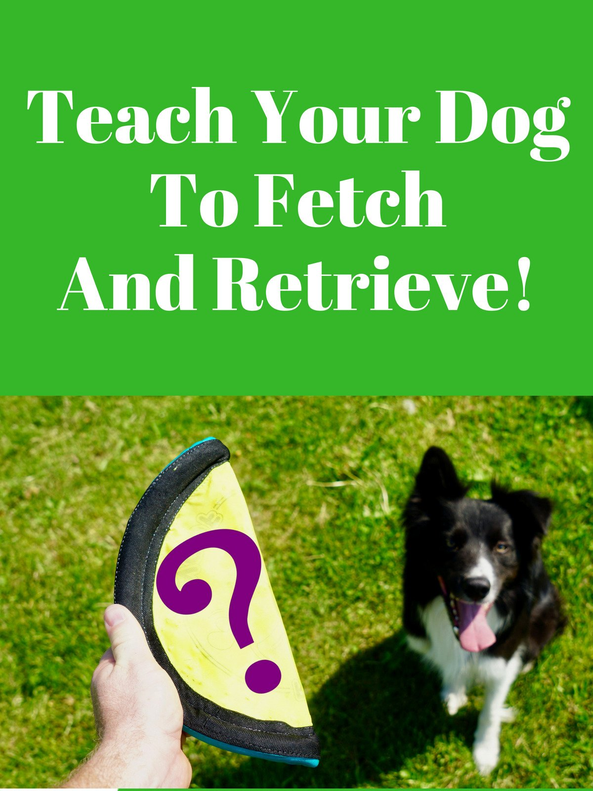 Teach Your Dog To Fetch And Retrieve