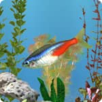 aniPet Freshwater Aquarium Live Wallp...