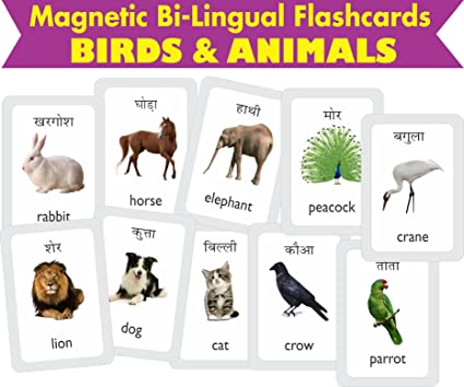 Domestic animals pictures with hindi names - photo#8