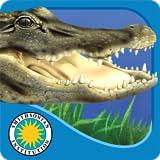 Alligator at Saw Grass Road - Smithsonian's Backyard