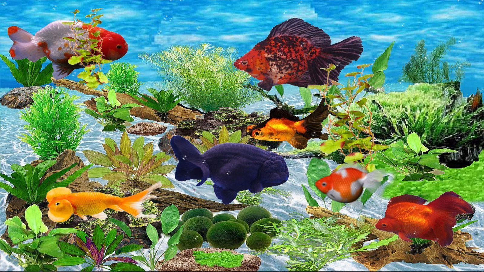 fantaisie-goldfish-aquarium-telechargement
