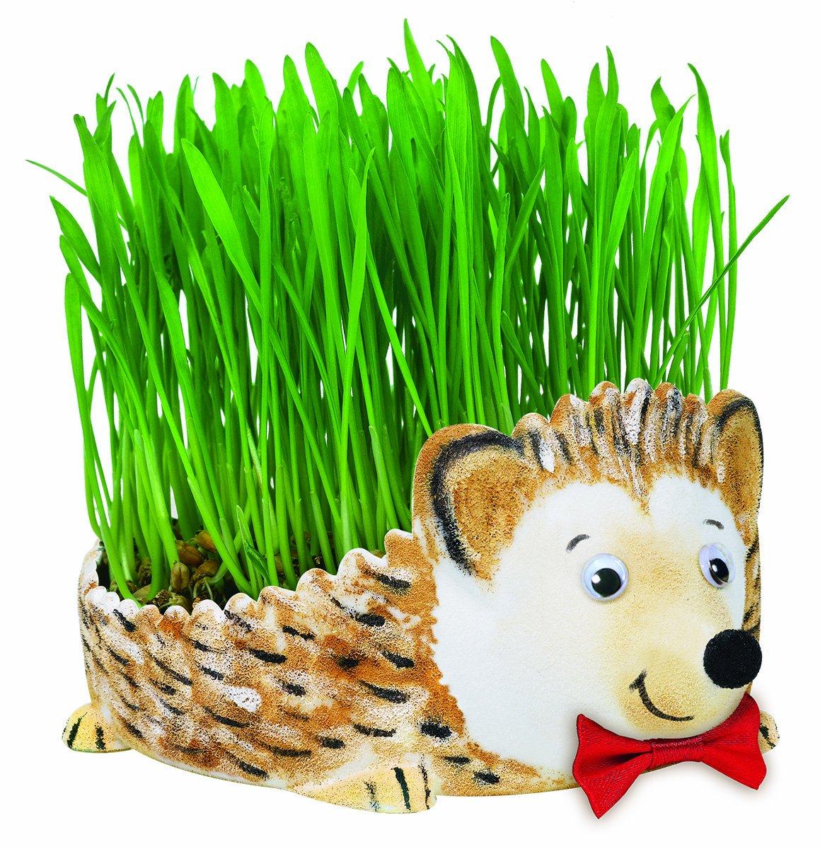 Creativity for Kids Grow a Hedgehog