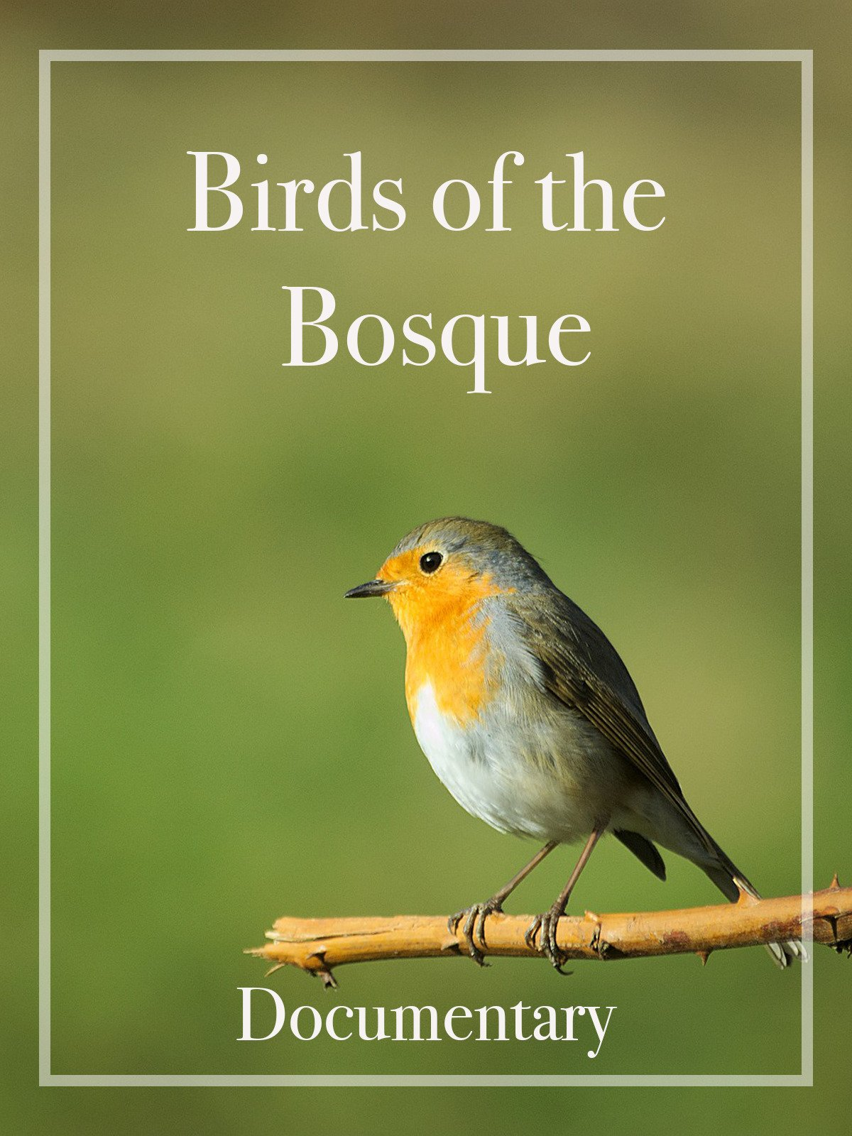Birds of the Bosque Documentary