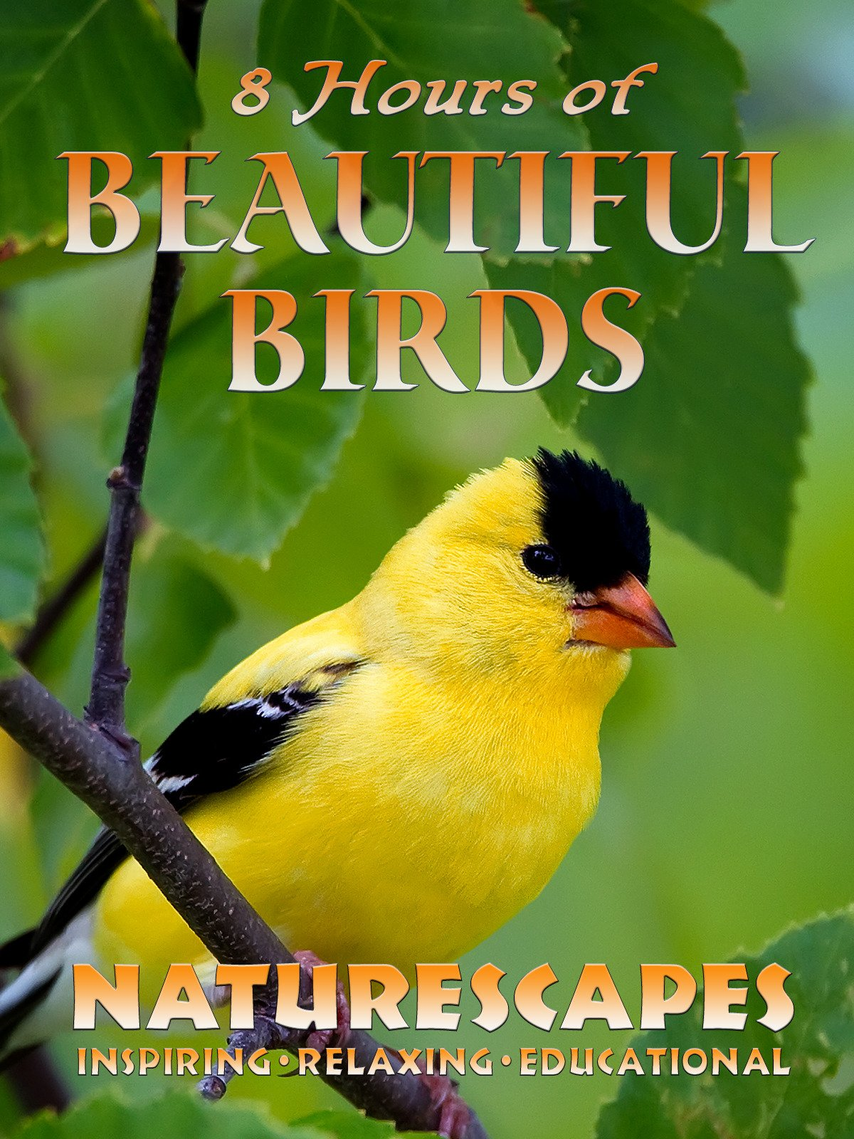 8 Hours of Beautiful Birds