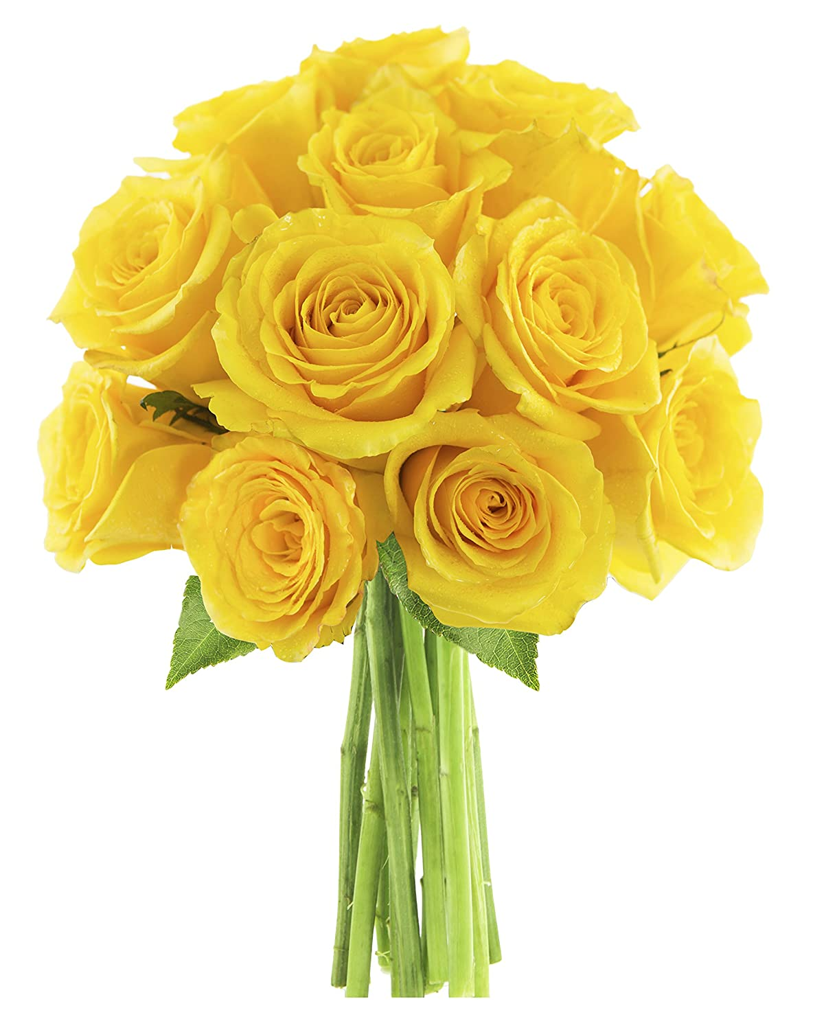 Kabloom One Dozen You Had Me at Hello Yellow Roses without Vase, 2.5 Pound