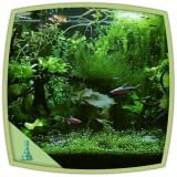 Tetra jungle aquarium