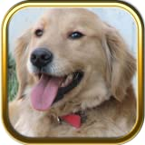 Golden Retriever Jigsaw Puzzle Games