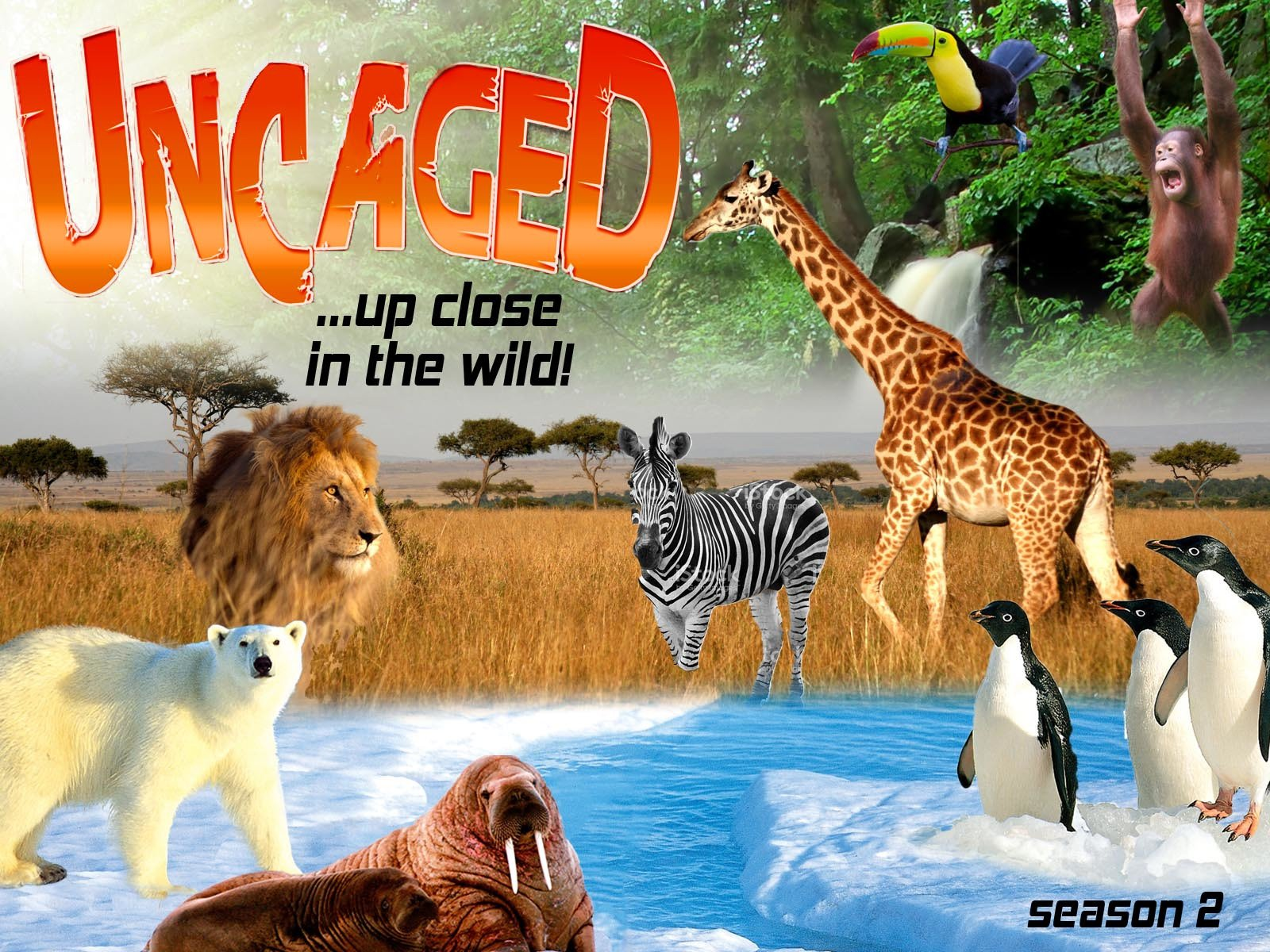 Uncaged...up close in the wild - Season 2