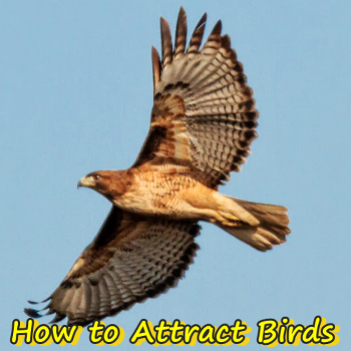 How To Attract Birds