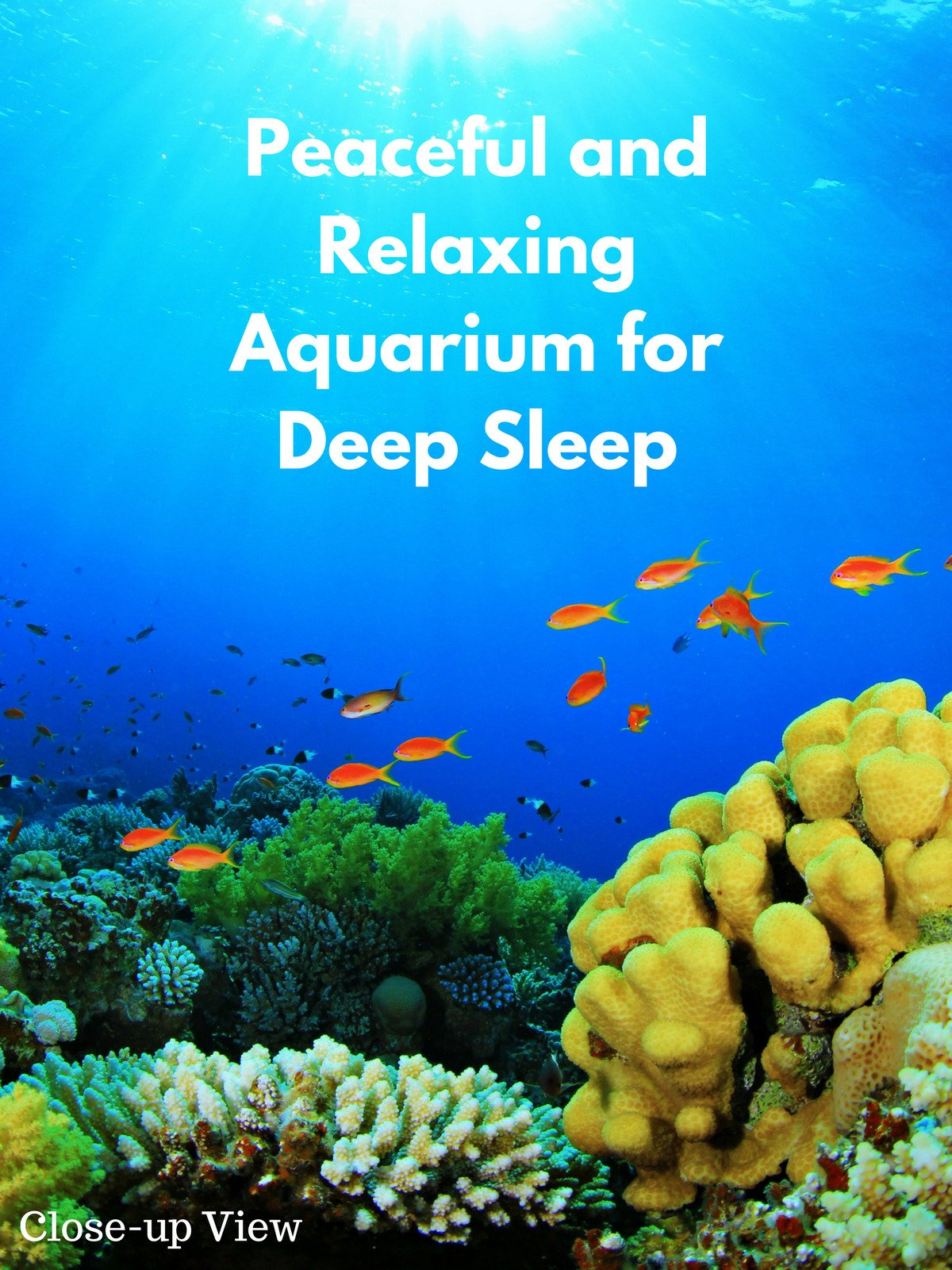 Peaceful and Relaxing Aquarium for Deep Sleep