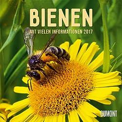 Bienen 2017