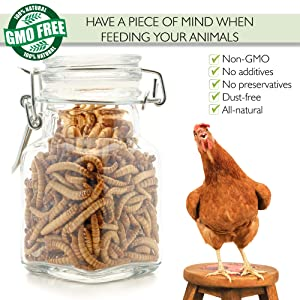 PICKY NEB 100% Non-GMO Mealworms for Chickens 25 lb - Whole Large Dried Meal Worms Bulk - High-Protein Chicken Treats (Tamaño: 25 lb)