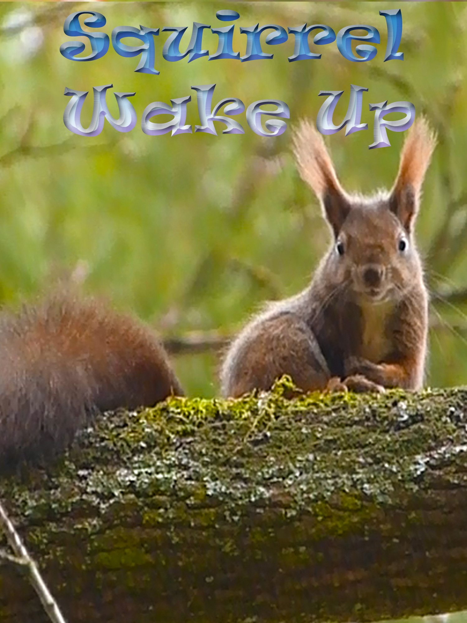Clip: Squirrel Wake Up