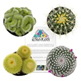 Altman Plants Assorted Live Cactus Collection mini for planters or gifts, 2.5