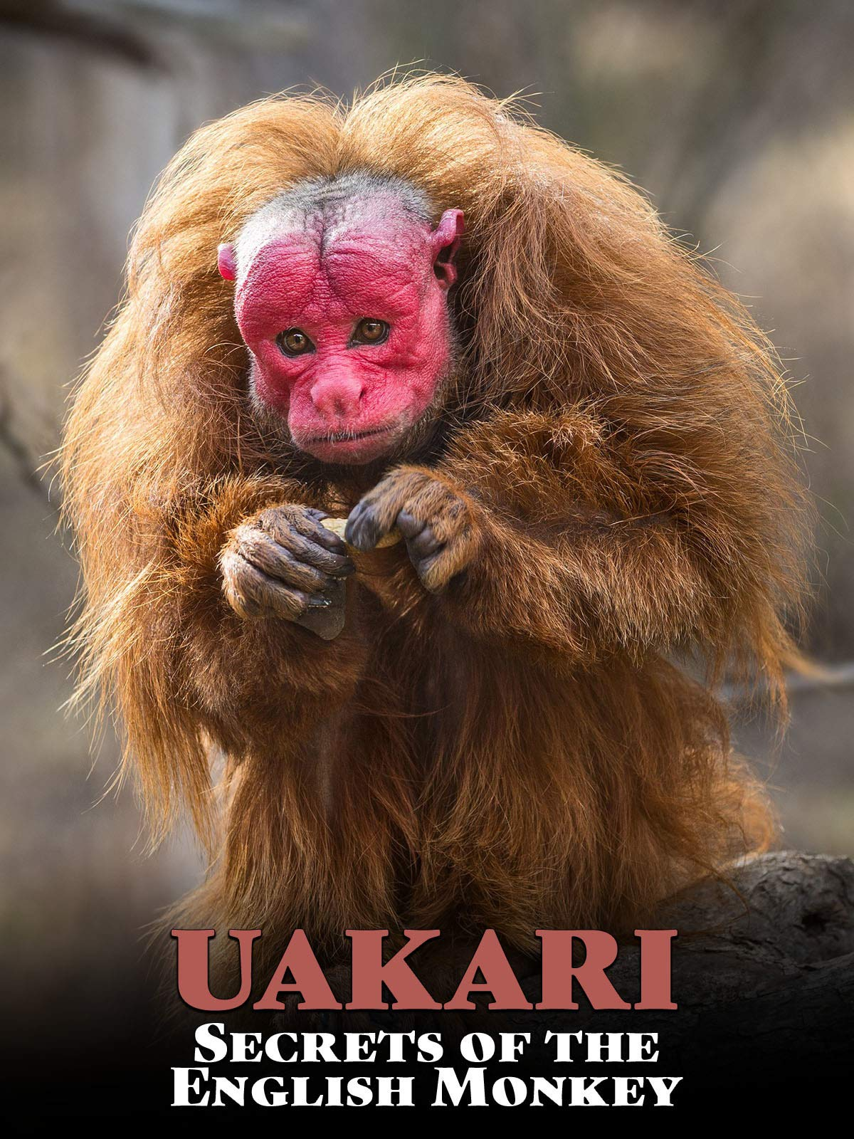 Uakari: Secrets of the English Monkey
