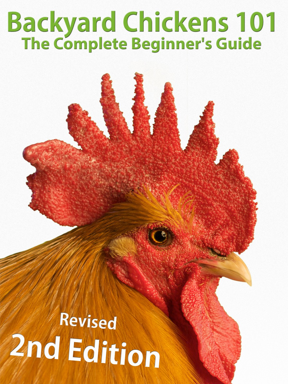 Backyard Chickens 101: The Complete Beginner's Guide