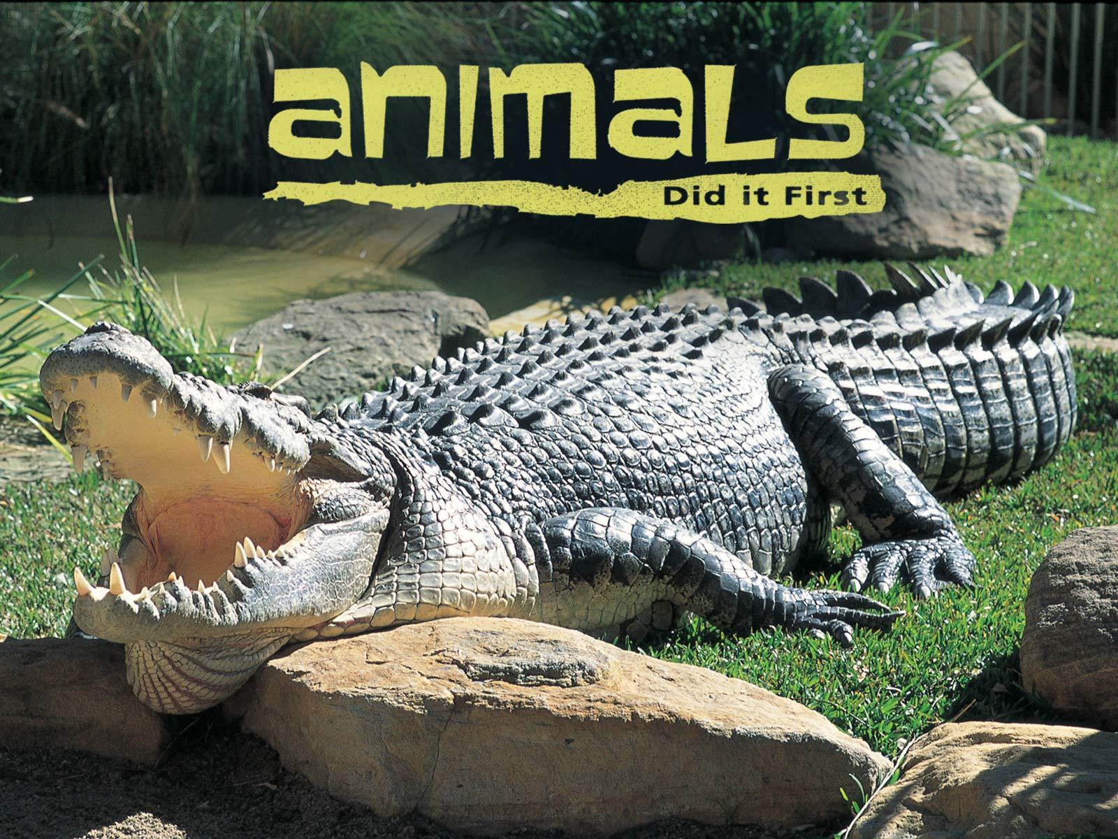 Animals Did It First - Season 1