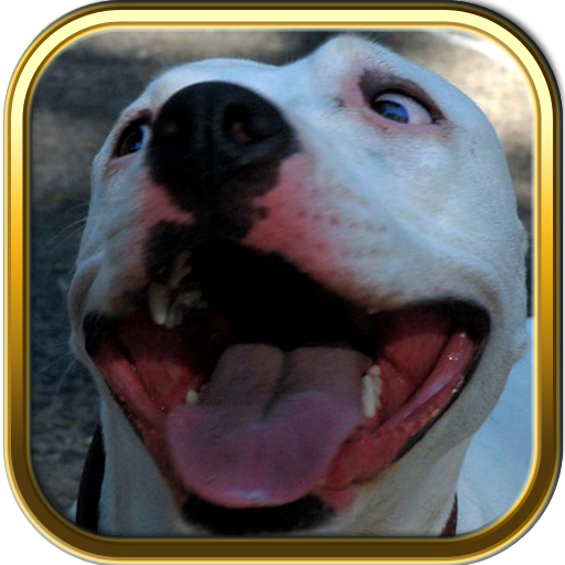 Pitbulls Dogs Jigsaw Puzzle Games (Perros Bulldog Ingles compare prices)