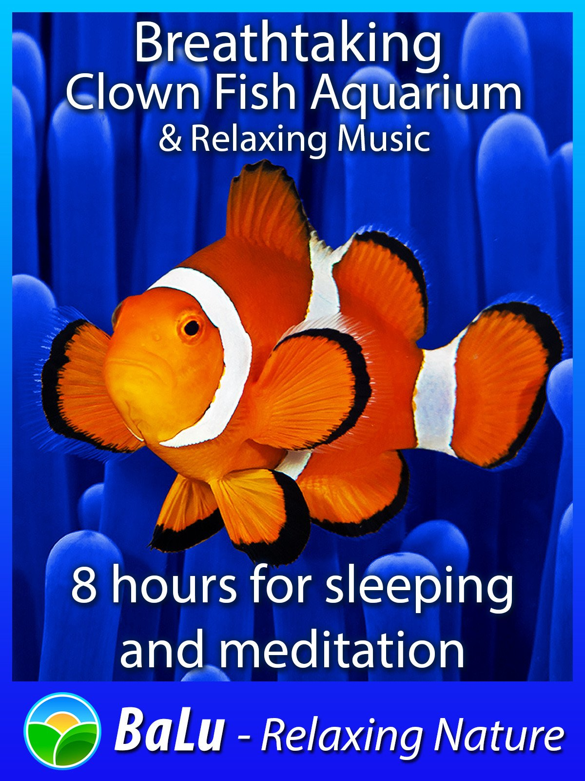 Breathtaking Clown Fish Aquarium & Relaxing Music