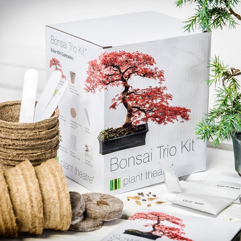 Kit trio Bonsai di Plant Theatre - 3 diversi alberi Bonsai da coltivare