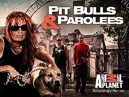 Pit Bulls & Parolees Season 6Pit Bulls & Parolees Season 6