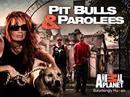 Pit Bulls & Parolees Season 6