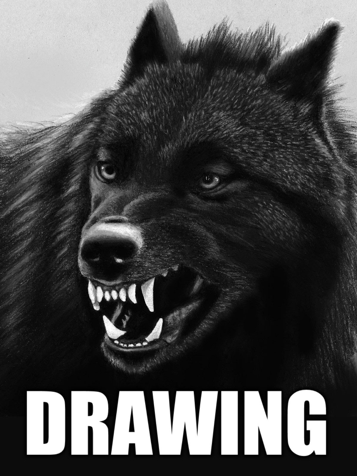 Clip: Time Lapse Drawing of a Black Wolf