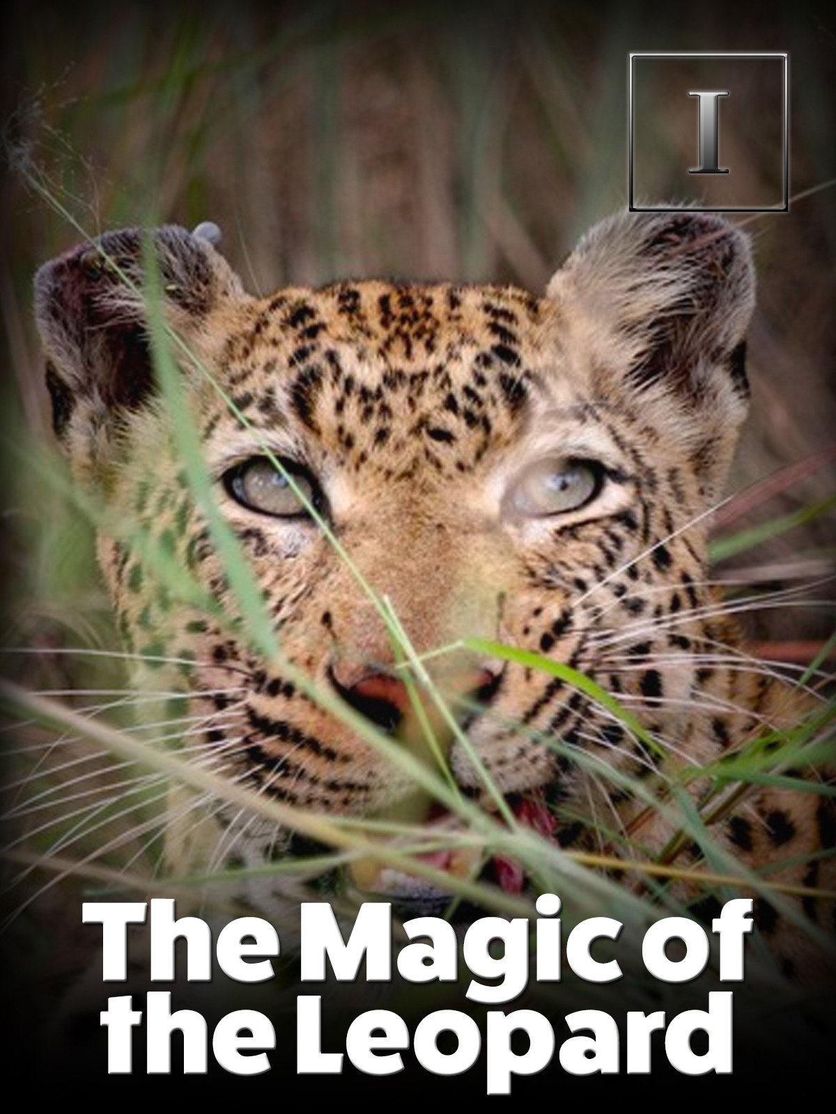 The Magic of the Leopard