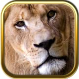 African Animals Safari Puzzle Games