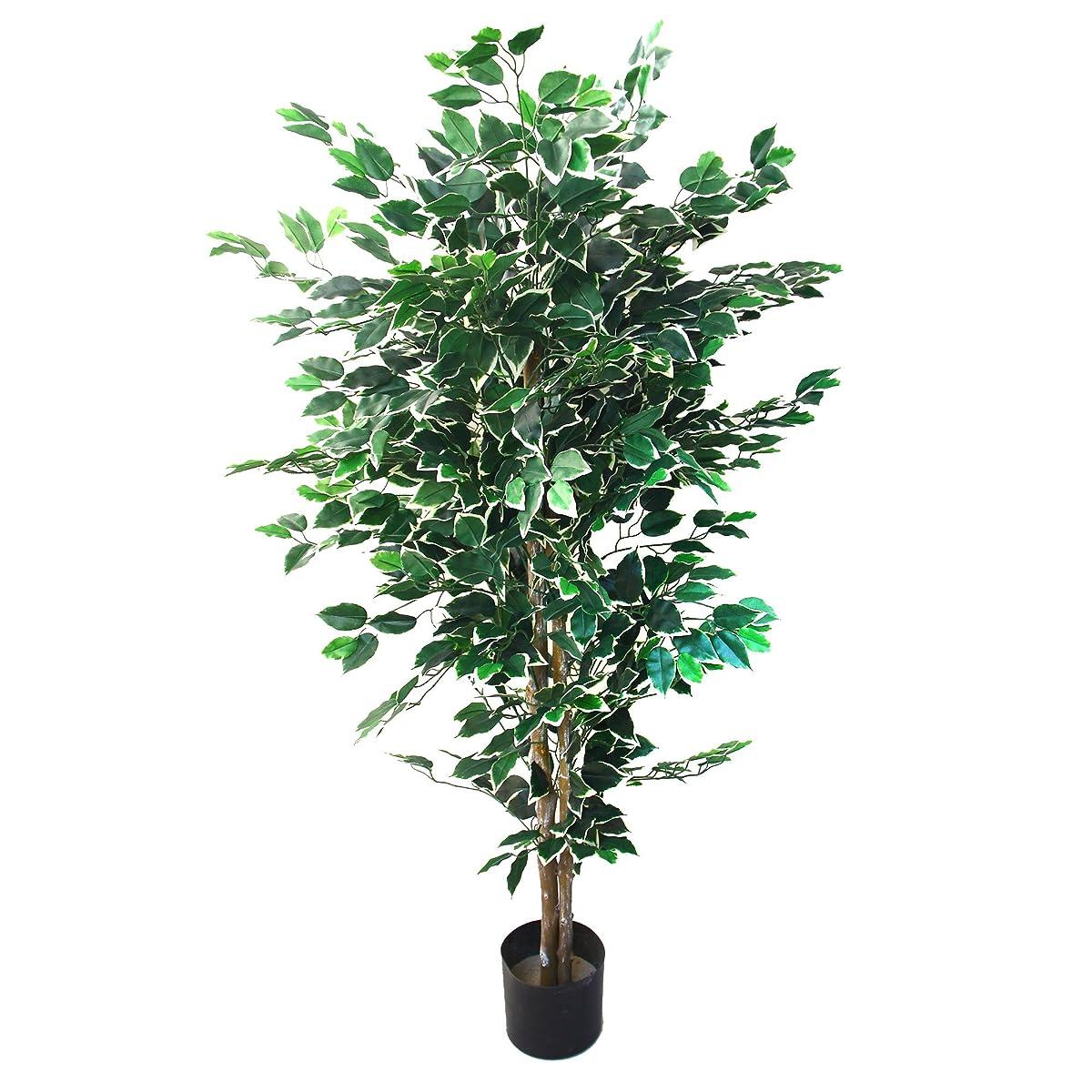 Pure Garden Ficus Tree, 5-Feet