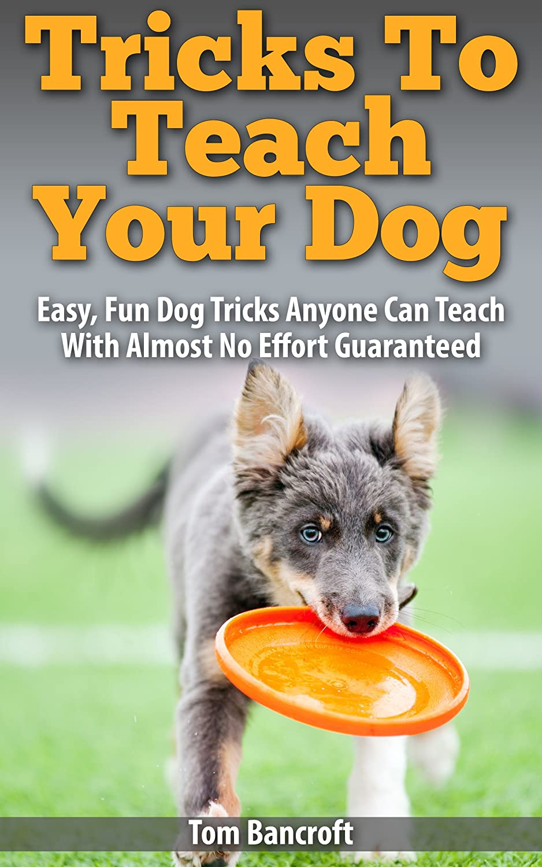 Tricks-To-Teach-Your-Dog