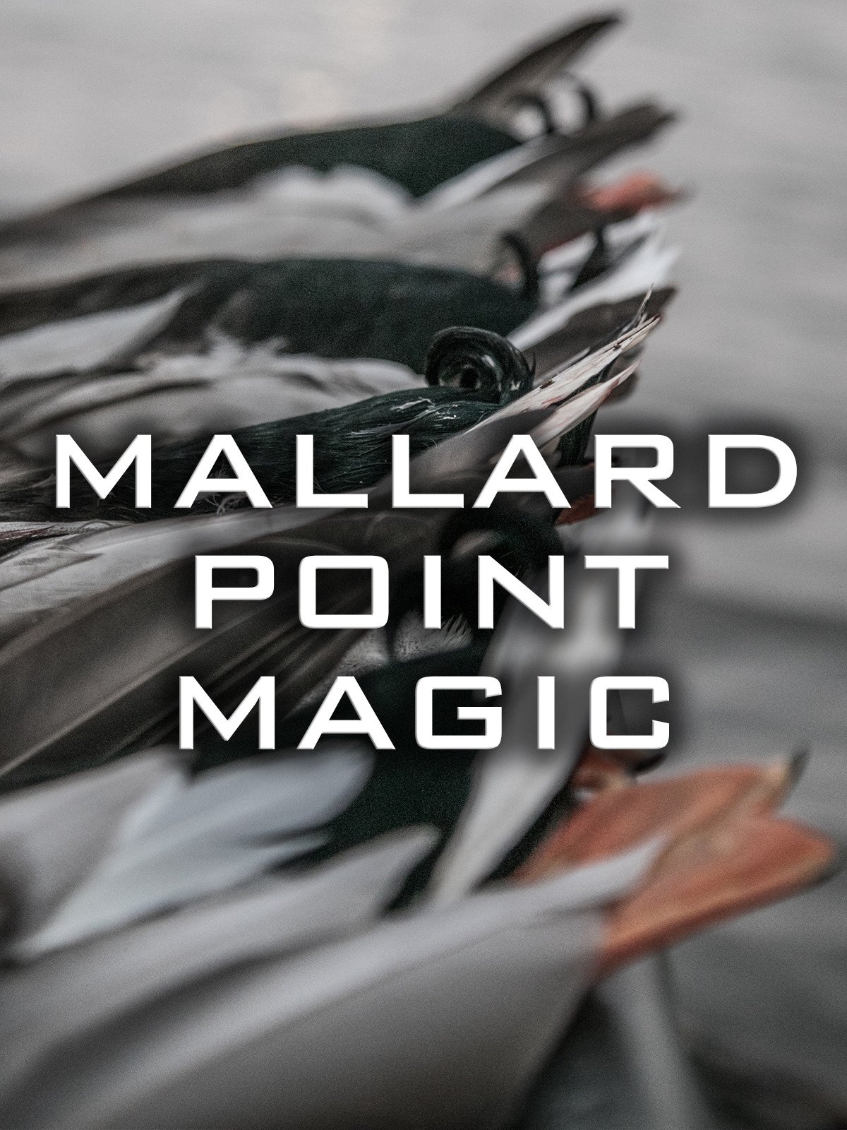 Mallard Point Magic