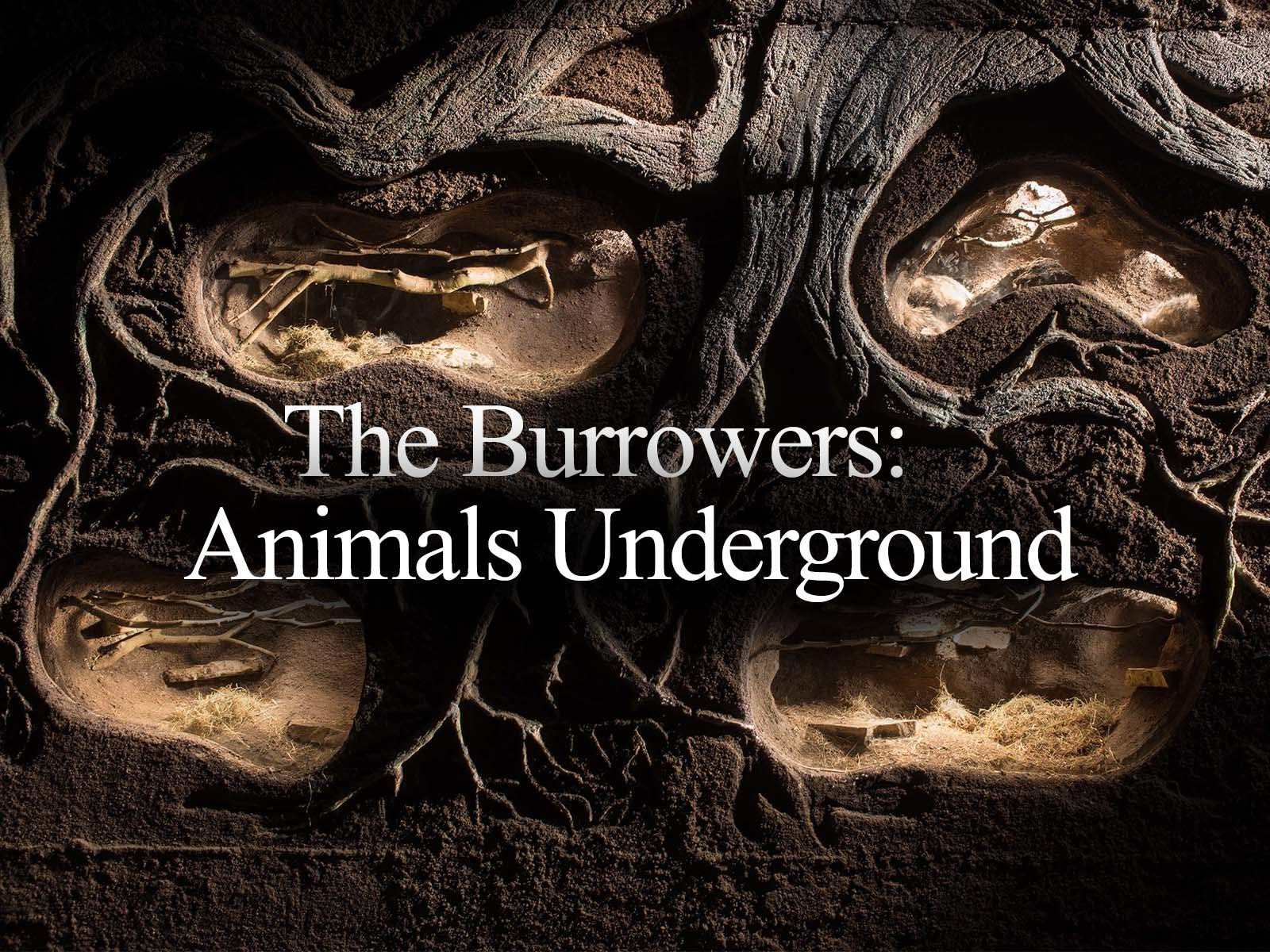 The Burrowers: Animals Underground - Season 1
