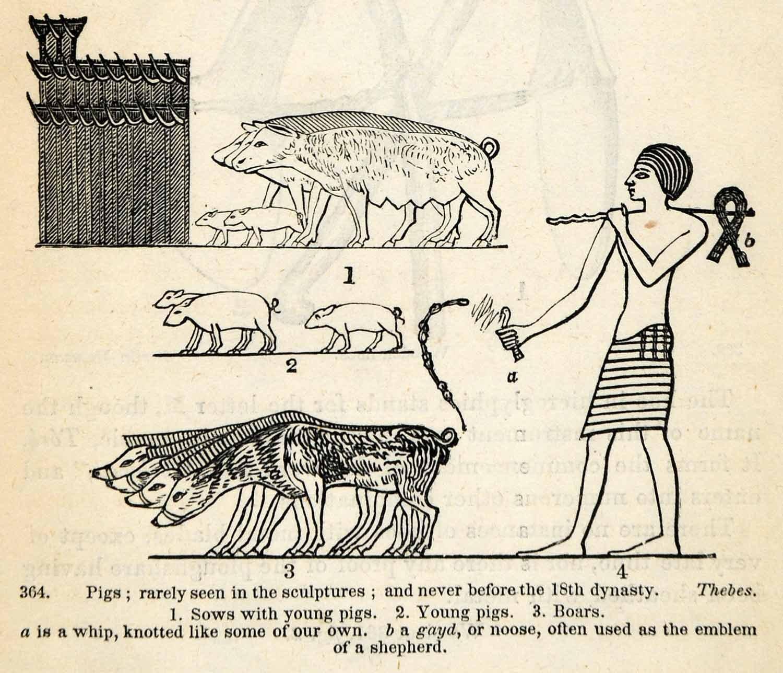 Ancient Egypt Livestock (1854 woodcut)