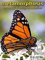 Metamorphosis: The Design and Beauty of Butterflies [HD]