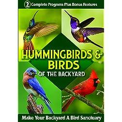 Hummingbirds & Birds of the Backyard