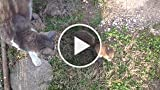 Baby Squirrel Plays with Family Cats