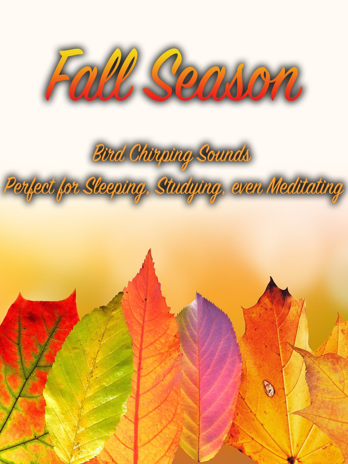 Fall Season Bird Chirping Sounds Perfect for Sleeping, Studying, even Meditating