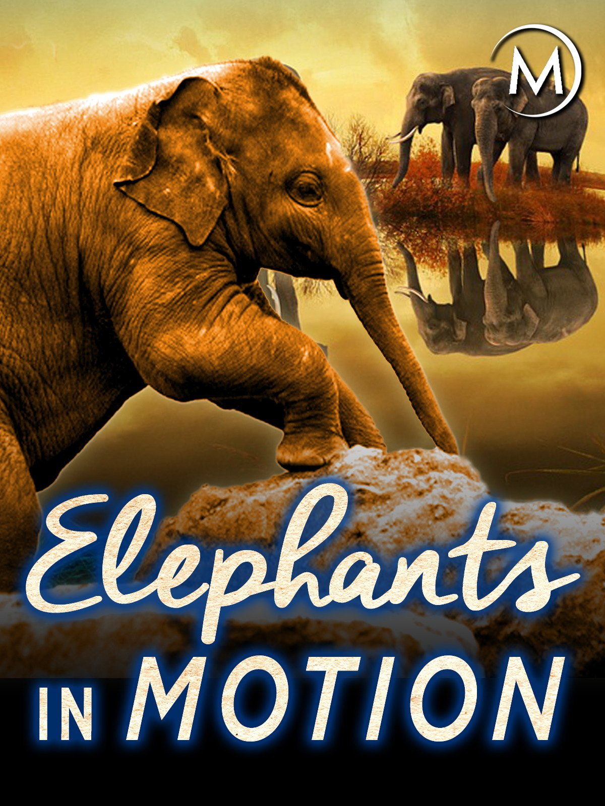 Elephants in Motion