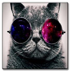 Dubstep Cat Video