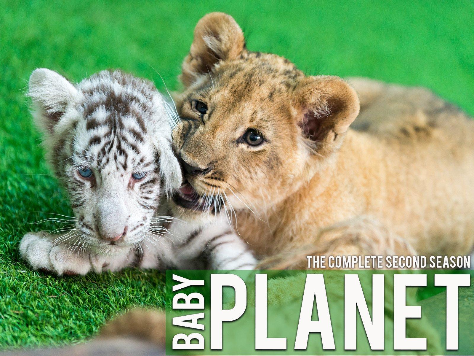 Baby Planet - Season 1