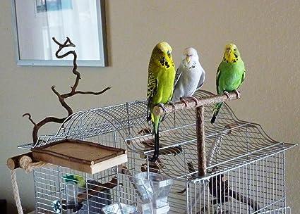 anflughilfe anflugstange f r den vogelk fig oder die voliere. Black Bedroom Furniture Sets. Home Design Ideas